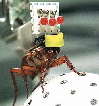 robo-roach.jpg